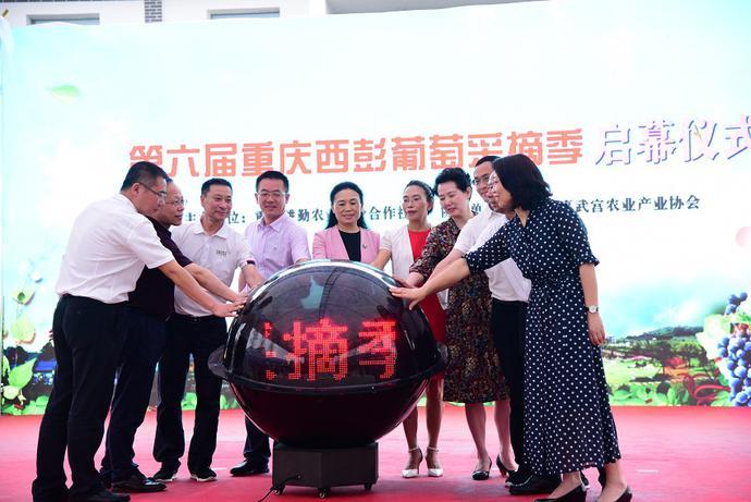 第六届重庆西彭葡萄采摘季活动开幕式正式开启