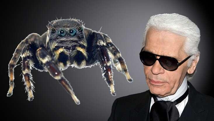 尚以时尚沙皇Karl Lagerfeld命名的跳跃蜘蛛