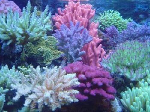 新加坡的珊瑚很可能在海平面上升