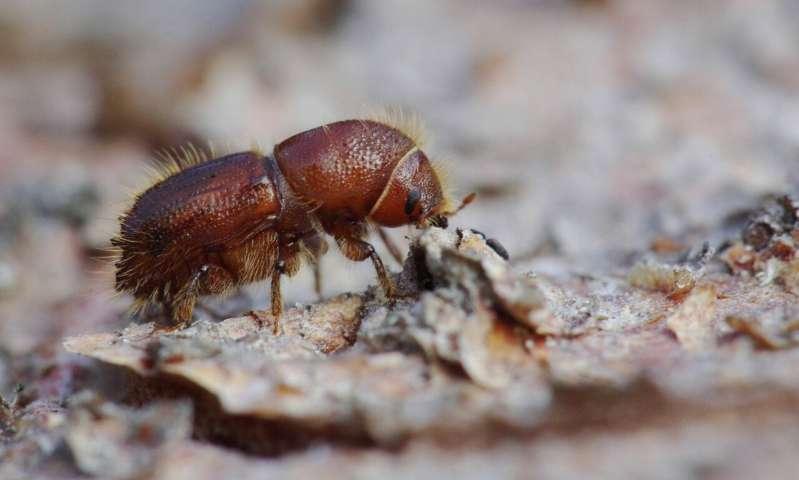 科学家对树皮甲虫繁荣感到震惊