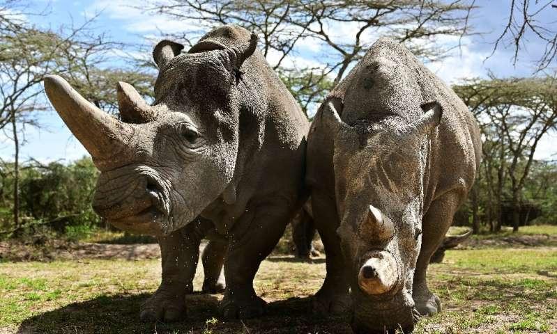 肯尼亚对野生动物偷猎者的科技战争