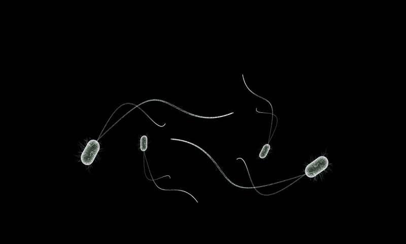 计算工具预测肠道微生物组随时间的变化