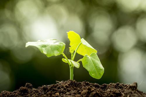 迈向全球所有植物库存