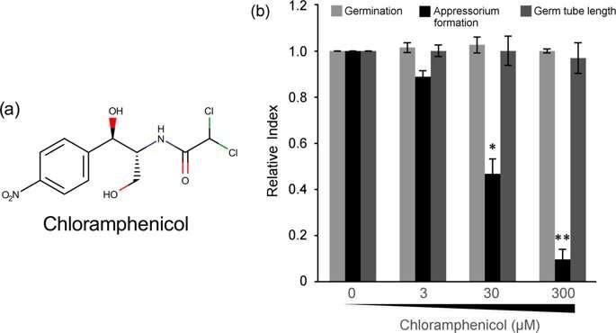 抗生素氯霉素如何对真核生物造成伤害