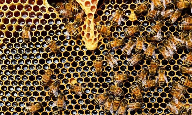 有机农业增强了蜜蜂的殖民地表现