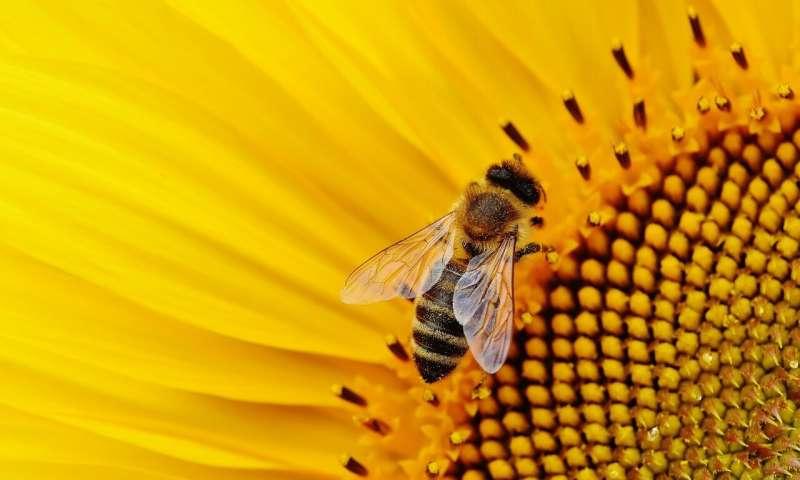 美国环保署杀虫剂决定后蜜蜂种群陷入困境