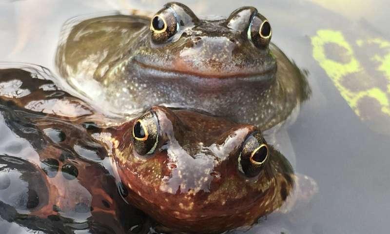皮肤细菌可以拯救青蛙免受病毒感染