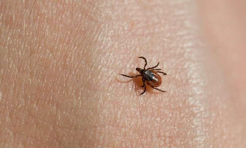 一种新出现的蜱传病原体如何逃避检测