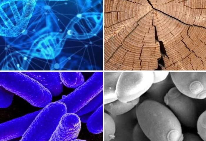 合成生物学路线图可以为未来10年制定研究议程