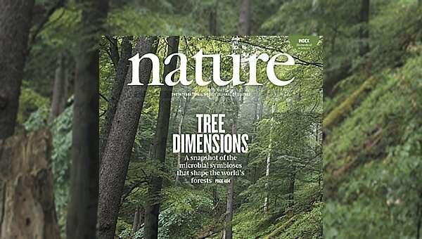 气候变化可能会影响微生物和树木之间的共生关系