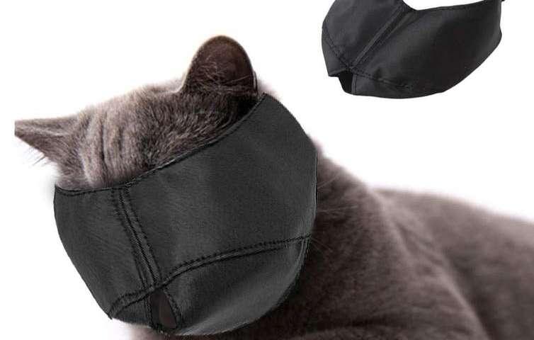 猫枪口残忍还是有用
