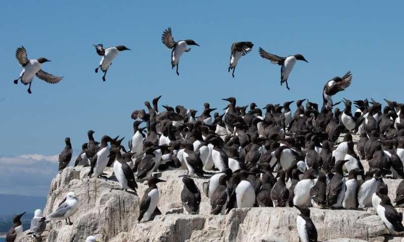 研究表明风可以防止海鸟进入其最重要的栖息地