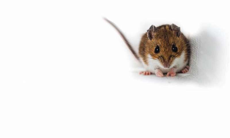 野生小型哺乳动物的个性如何影响森林结构