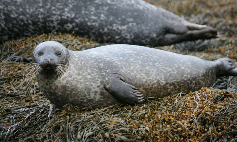 可穿戴设备揭示了海豹如何为潜水做准备