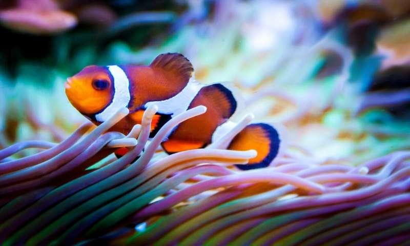 珊瑚白化会导致鱼类生命的永久性变化