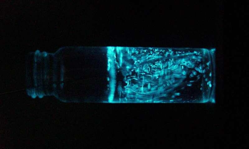 甲藻浮游生物发光使它们的捕食者不会吃掉它们