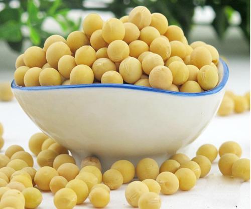 尽管猪瘟持续爆发 但中国的大豆需求令人惊讶地强劲