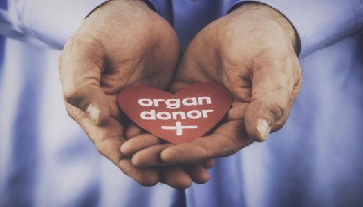 特朗普对器官移植的行政命令将为一家的生物技术提供动力