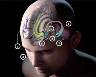 海马体是如何学习的 大脑靠回放做决策