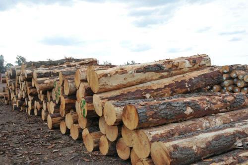 斗山综合木材拟进军中国木材市场