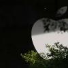 随着法律审查的加强,苹果将削减应用商店的费用